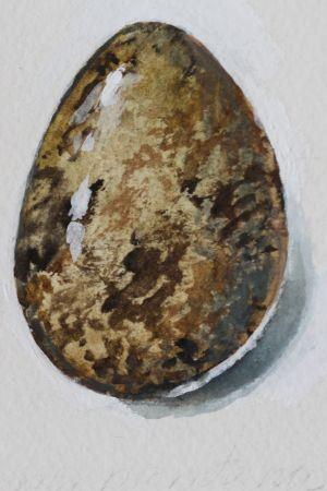 Vesivärimaalaus pikkuvarpusen munasta