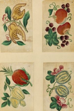 Fyra teckningar av grönsaker och frukt. Four drawings of vegetables and fruit. THE NEW YORK PUBLIC LIBRARY DIGITAL COLLECTIONS