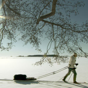 Mies hiihtää ja vetää kelkkaa saaristossa jäällä.