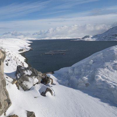 Jäämeren talvet ovat entistä leudompia. Turska siirtyy yhä pohjoisemmaksi.