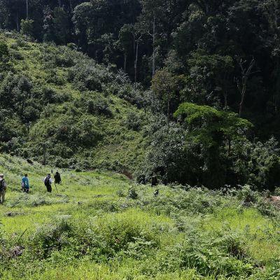 Ihmisiä kävelemässä metsäisessä luonnossa.