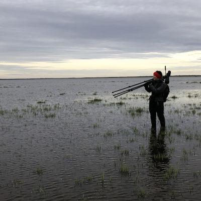 Fågelskådare står på våtmark och blickar ut över havet.