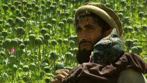 Afgaanimies istuu lapsensa kanssa oopiumiunikkopellolla dokumentissa Heroin Express (1995)