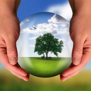 Träd som växer inne i en kristallkula.