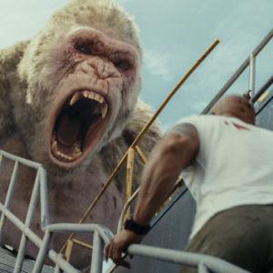 Gorillan George gapar stort.
