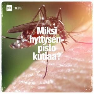 Kuvituskuva: Hyttynen pistää.