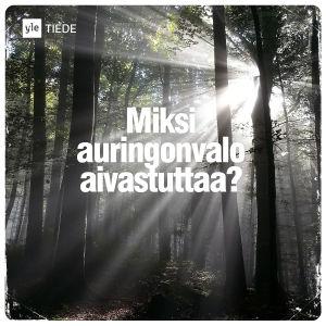 Kuvituskuva: auringonsäteitä metsässä.