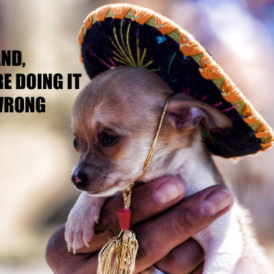 Hund i sombrero.