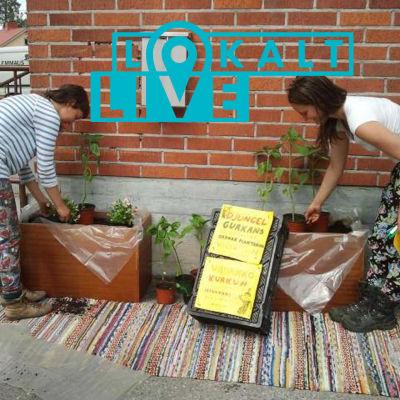 två kvinnor planterar växter i lådor.
