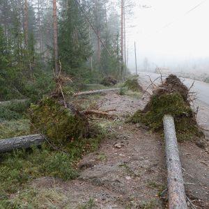 myrskyssä kaatuneita puita tien vieressä
