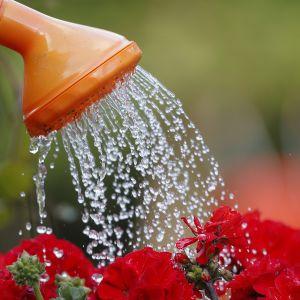 kukkia kastellaan