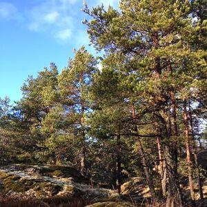 Metsäinen kallio Fiskarissa.