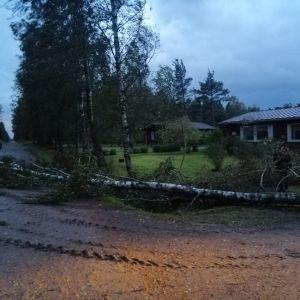 Fallet träd vid Östra linjen i Övermark.