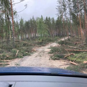 Kaatuneita puita tien molemmin puolin Rokualla.