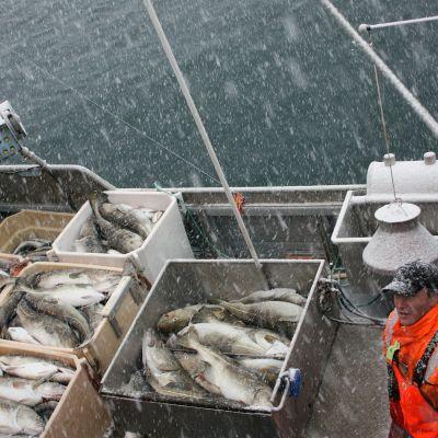 Fiskare på Røst i Lofoten