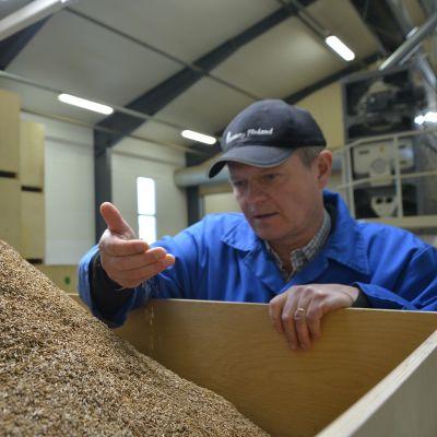 Tehtaanjohtaja Dan Kjällberg hypistelee pakkausvalmiiksi seulottua kuminaa, jota jalostetaan parhaimmillaan maailmalle jopa 3 miljoonaa kiloa vuodessa.