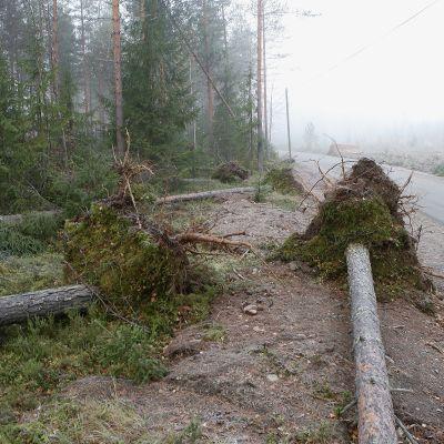 myrskyssä kaatuneita puita tienlaidassa