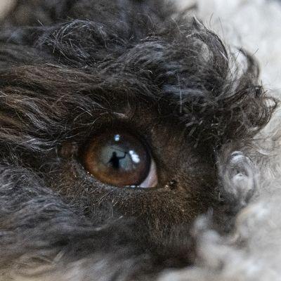 Koiran katse, kuvamanipulaatio