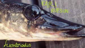 Hauki, päällä Kari Rupsun Luontoradio -teksti