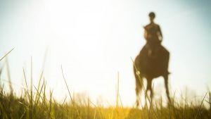 Hevonen ratsastaja