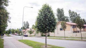Radhusgata kantad av träd.