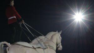 Esiintyjä ja hevoset hevosnäytöksessä.