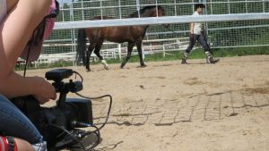 Nainen kävelyttää hevosta kentällä, kuvaaja kuvaa