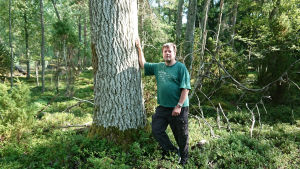 En äldre man lutar mot ett träd i  en urskog på sommaren