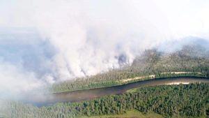 Skog som brinner.