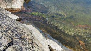 Inga alger, klart vatten vid holmen Skärgården, mellan Borstö och Lökholm