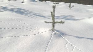 Lumijäljet hangella.
