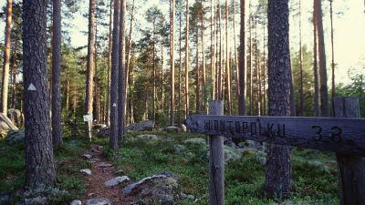 Luontopolku Koloveden kansallispuistossa