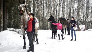 Hevosia ja taluttajia ulkona talvella.
