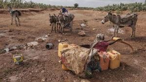 En kvinna som sitter i en uttorkad flod som försöker skopa upp vatten.