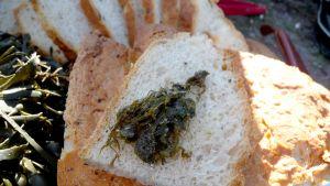 Stekt rörhinna på bröd.