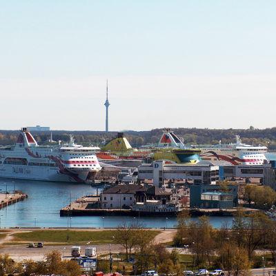 Tallinns hamn.