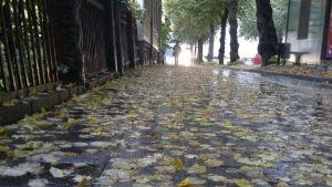 Regnväder igen