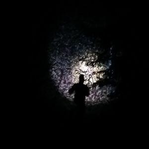 Ljuset från en orienterares pannlampa lyser upp nattskogen.