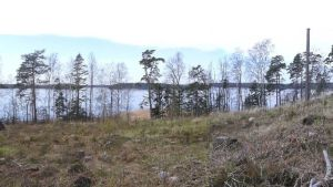 En avverkad skog vid en strand.