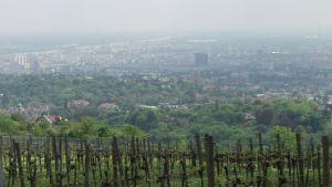 Viiniviljelysten takana siintää Wien. Kuvassa myös Erkki Toivanen juontohommissa, v. 2002.