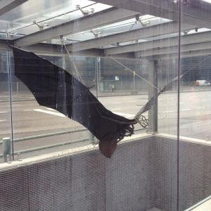 Lepakko - fladdermusen till minnet av huset Lepakko i Helsingfors