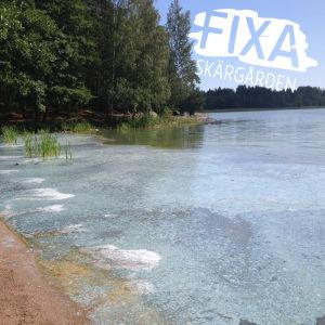 Blågröna alger vid Littois träsk