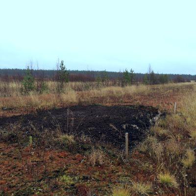 Sonkajärven Sukevalla sijaitsevan yhteismetsän tuhkattu alue erottuu selvästi tuhkaamattomasta, muralle jääneestä alueesta.