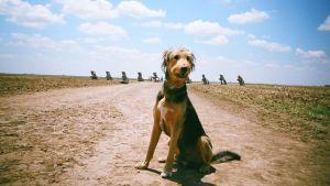 Koira seisoo aavikolla