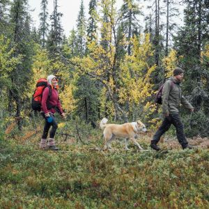 Nainen, mies ja koira metsässä retkellä.
