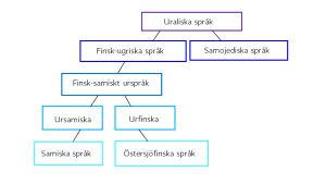 Figuren visar hur de samiska språken har sina rötter i det uraliska urspråket.