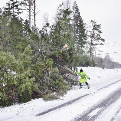 Stormen välte många träd över körbanan.