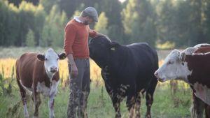 Hakoisten kartanon nuorempi isäntä Max Rosenberg ja komeaa Hereford-karjaa supisuomalaisessa maisemassa. Kuva Riikka-Maria Pöllä.