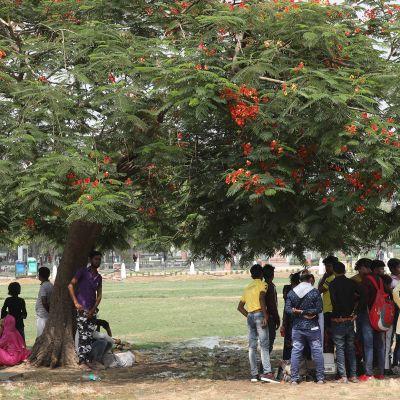 Ihmiset seisovat puun varjossa New Delhissä jossa on ollut reilusti yli 40 asteen helteitä.