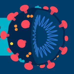 Viruset är formad som en boll och har taggar som hjälper viruset att fästa sig.